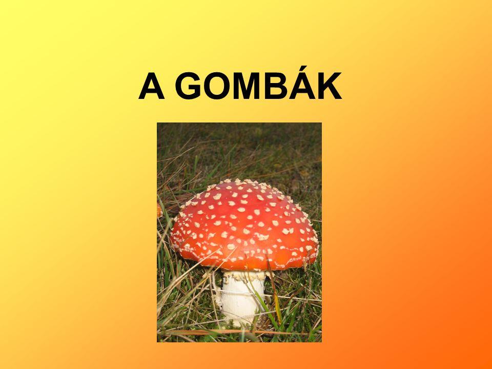 A GOMBÁK