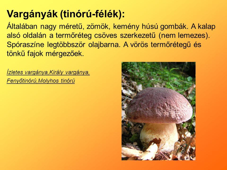 Vargányák (tinórú-félék): Általában nagy méretű, zömök, kemény húsú gombák.