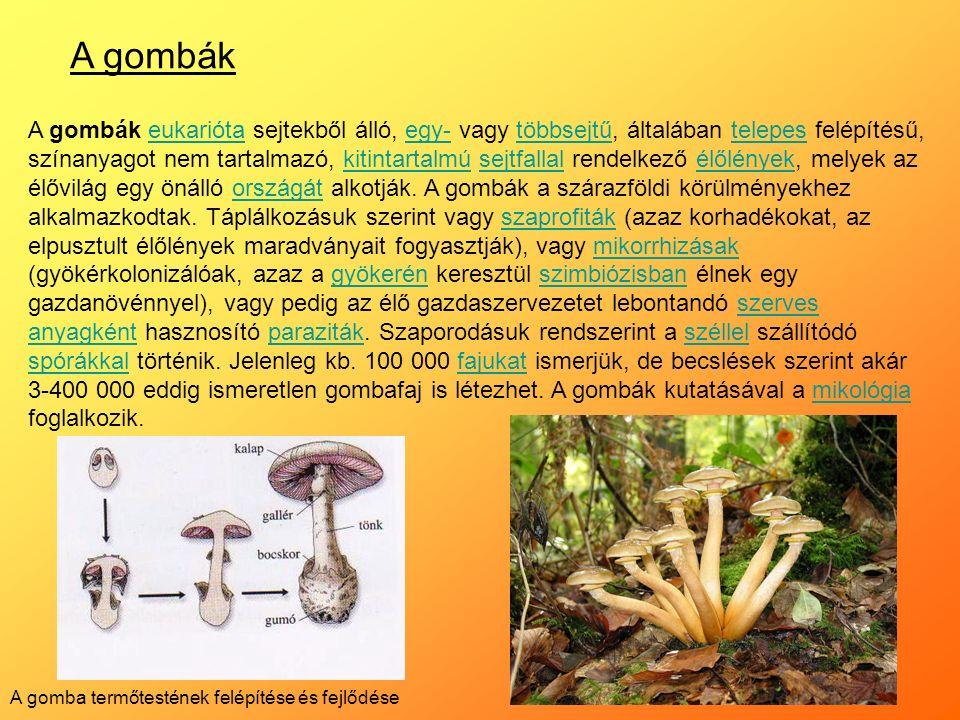 A gombák A gombák eukarióta sejtekből álló, egy- vagy többsejtű, általában telepes felépítésű, színanyagot nem tartalmazó, kitintartalmú sejtfallal rendelkező élőlények, melyek az élővilág egy önálló országát alkotják.