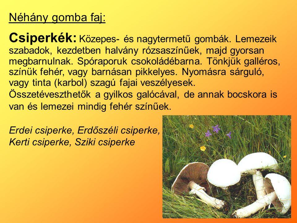 Néhány gomba faj: Csiperkék: Közepes- és nagytermetű gombák.