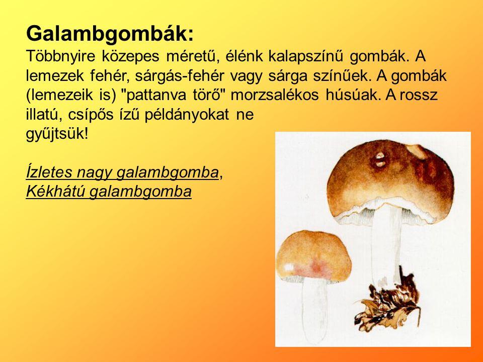 Galambgombák: Többnyire közepes méretű, élénk kalapszínű gombák.