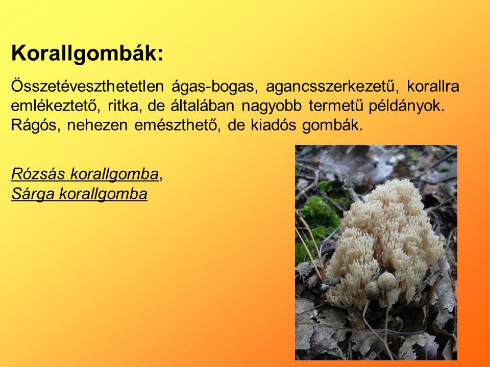 Korallgombák: Összetéveszthetetlen ágas-bogas, agancsszerkezetű, korallra emlékeztető, ritka, de általában nagyobb termetű példányok.