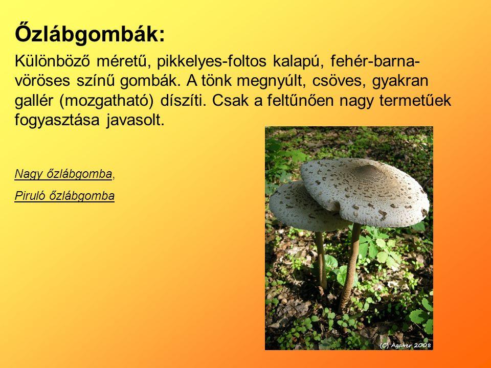 Őzlábgombák: Különböző méretű, pikkelyes-foltos kalapú, fehér-barna- vöröses színű gombák.