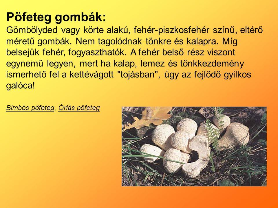 Pöfeteg gombák: Gömbölyded vagy körte alakú, fehér-piszkosfehér színű, eltérő méretű gombák.