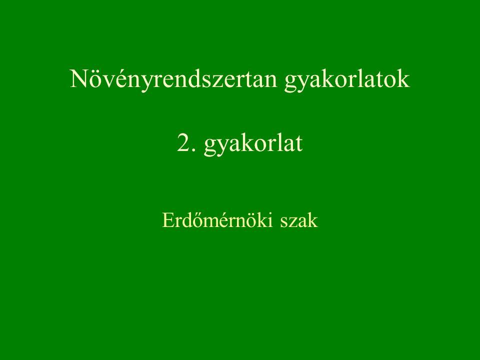 Erdőmérnöki szak Növényrendszertan gyakorlatok 2. gyakorlat