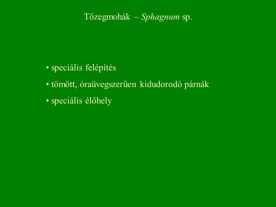 Tőzegmohák – Sphagnum sp. speciális felépítés tömött, óraüvegszerűen kidudorodó párnák speciális élőhely