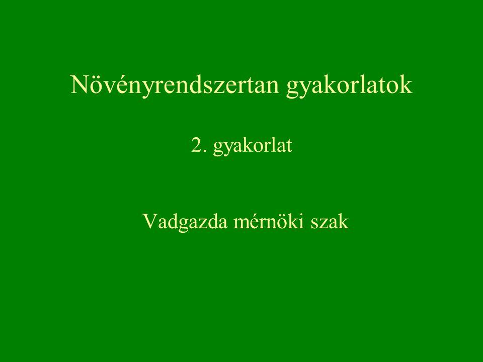 Áltrifla – Scleroderma citrinum Pöfeteg-félék – Gasteromycetales