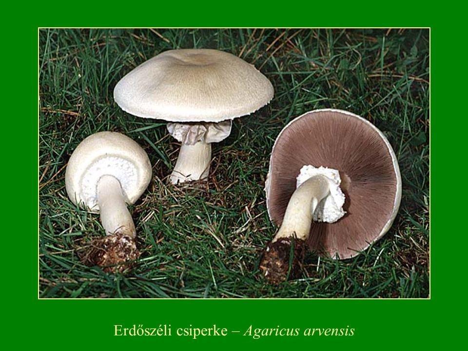Néhány faj zöldül, vörösödik, van feketedő is.A spórapor dohánybarna, piszkosbarna.
