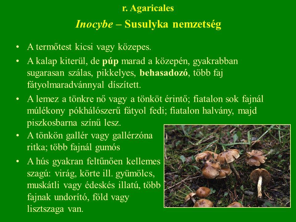Inocybe – Susulyka nemzetség A termőtest kicsi vagy közepes.