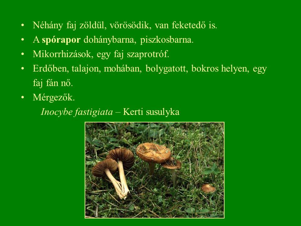 Néhány faj zöldül, vörösödik, van feketedő is. A spórapor dohánybarna, piszkosbarna.