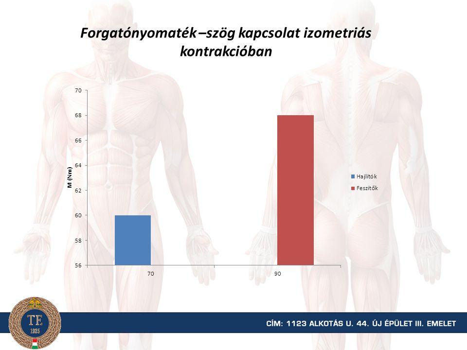 Az izomfejek százalékos részt vétele az erőkifejtésben