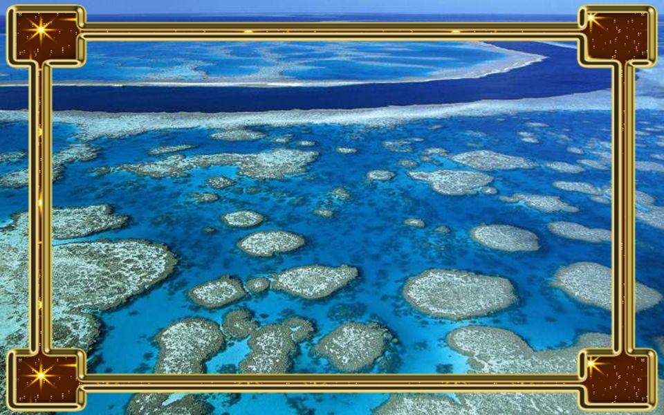Nagy-korallzátony A Nagy-korallzátony csak akkor maradhat életben, ha megfelelő a tengervíz hőmérséklete, kiváló kalcium- és sótartalommal rendelkezik