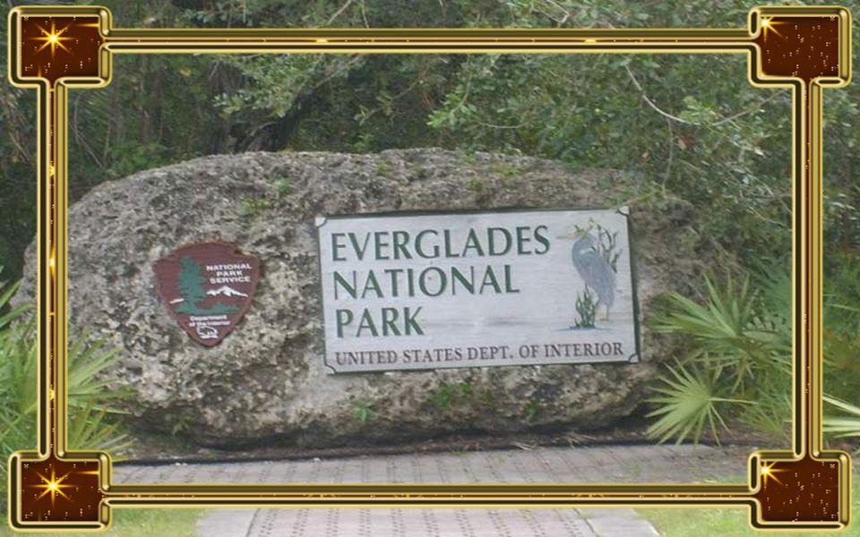 Everglades Nemzeti Park A nemzeti park Floridában található, hírnevét elsősorban egyedülállóan sokszínű élővilágának köszönheti. Az emberi beavatkozás