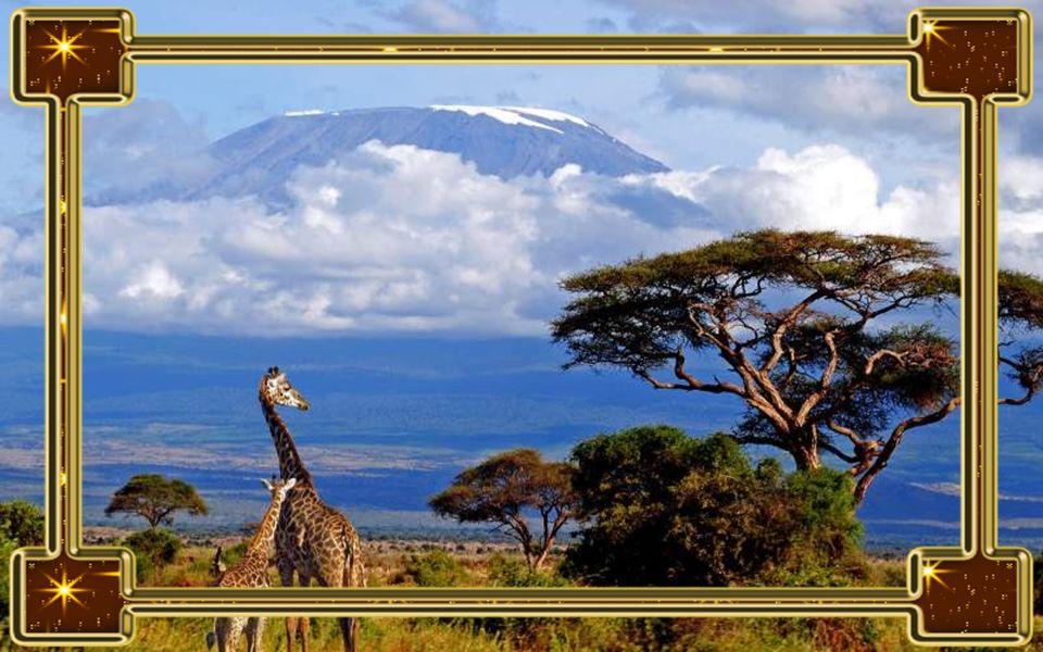 Kilimandzsáró Afrika legmagasabb pontjáról egyre gyorsabb ütemben tűnik el a látványos hótakaró, sajnos már talán 10 év sem kell, hogy a kontinens egy