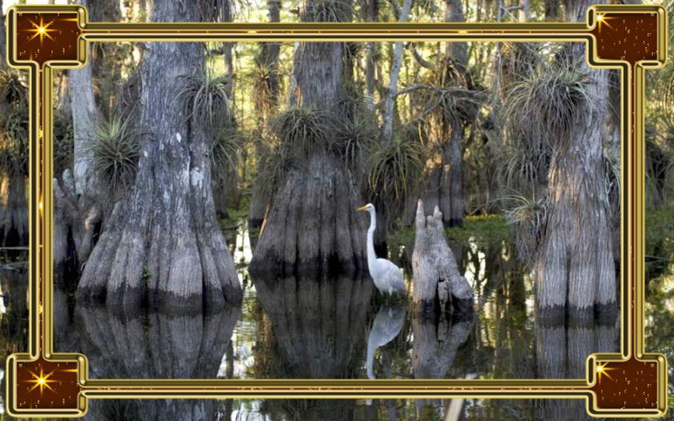Esőerdők A Föld összes esőerdeje veszélybe kerül, mihelyst pár fokkal növekszik az átlaghőmérséklet.