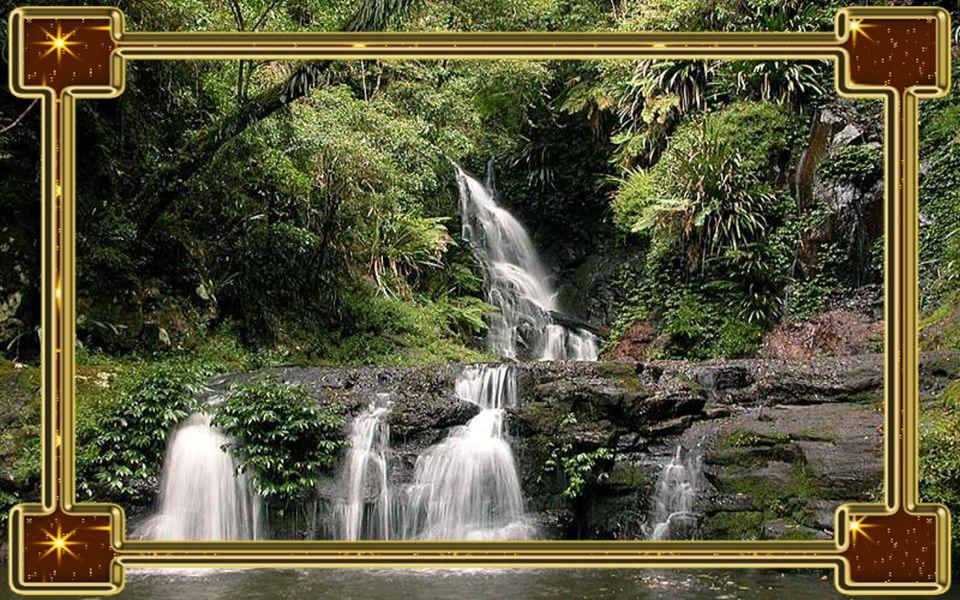 Esőerdők A Föld összes esőerdeje veszélybe kerül, mihelyst pár fokkal növekszik az átlaghőmérséklet. Ez nem csak az évszakok- és az éghajlati tényezők