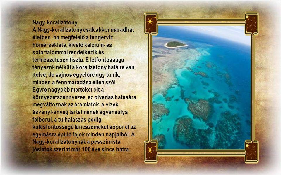 Nagy-korallzátony A Nagy-korallzátony csak akkor maradhat életben, ha megfelelő a tengervíz hőmérséklete, kiváló kalcium- és sótartalommal rendelkezik és természetesen tiszta.