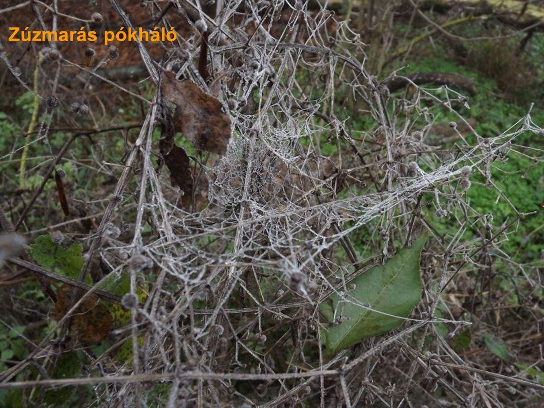 Zúzmarás pókháló