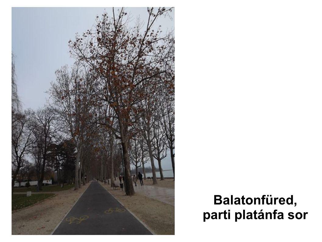 Balatonfüred, parti platánfa sor