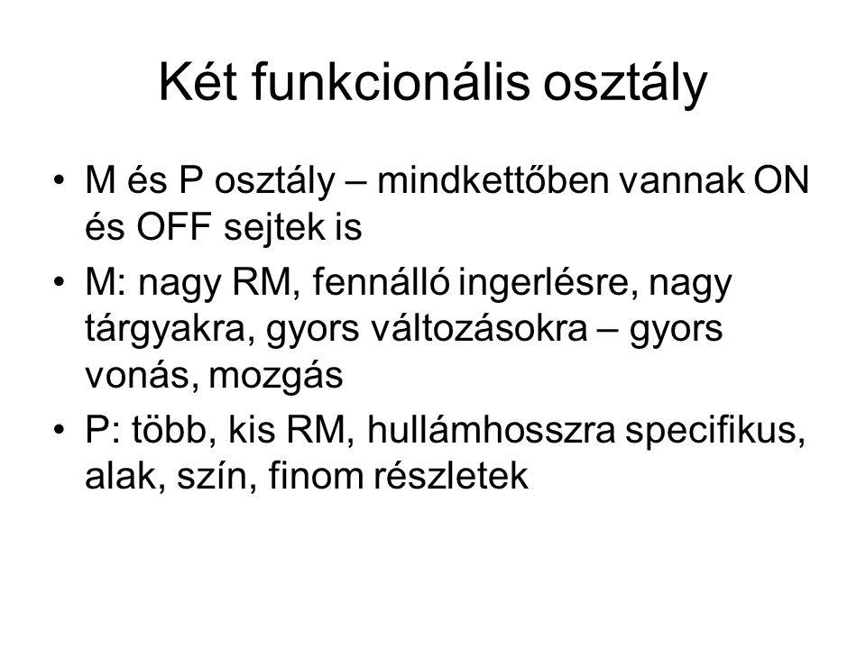 Két funkcionális osztály M és P osztály – mindkettőben vannak ON és OFF sejtek is M: nagy RM, fennálló ingerlésre, nagy tárgyakra, gyors változásokra – gyors vonás, mozgás P: több, kis RM, hullámhosszra specifikus, alak, szín, finom részletek