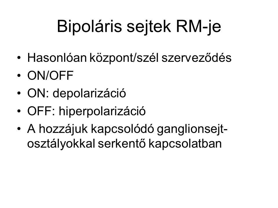 Bipoláris sejtek RM-je Hasonlóan központ/szél szerveződés ON/OFF ON: depolarizáció OFF: hiperpolarizáció A hozzájuk kapcsolódó ganglionsejt- osztályokkal serkentő kapcsolatban