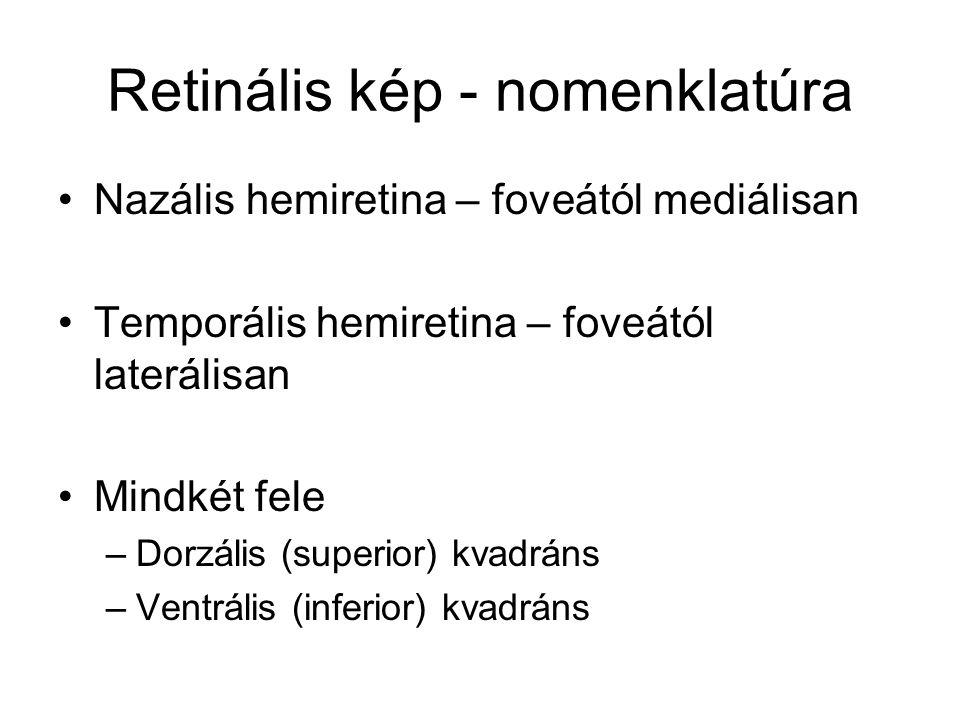Retinális kép - nomenklatúra Nazális hemiretina – foveától mediálisan Temporális hemiretina – foveától laterálisan Mindkét fele –Dorzális (superior) kvadráns –Ventrális (inferior) kvadráns