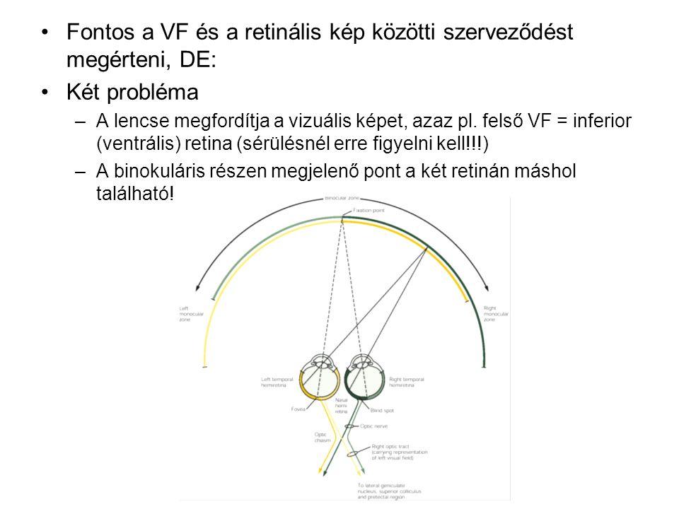 Fontos a VF és a retinális kép közötti szerveződést megérteni, DE: Két probléma –A lencse megfordítja a vizuális képet, azaz pl.