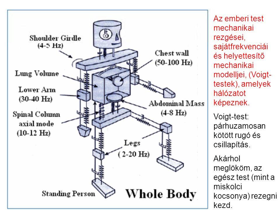 Az emberi test mechanikai rezgései, sajátfrekvenciái és helyettesítő mechanikai modelljei, (Voigt- testek), amelyek hálózatot képeznek.