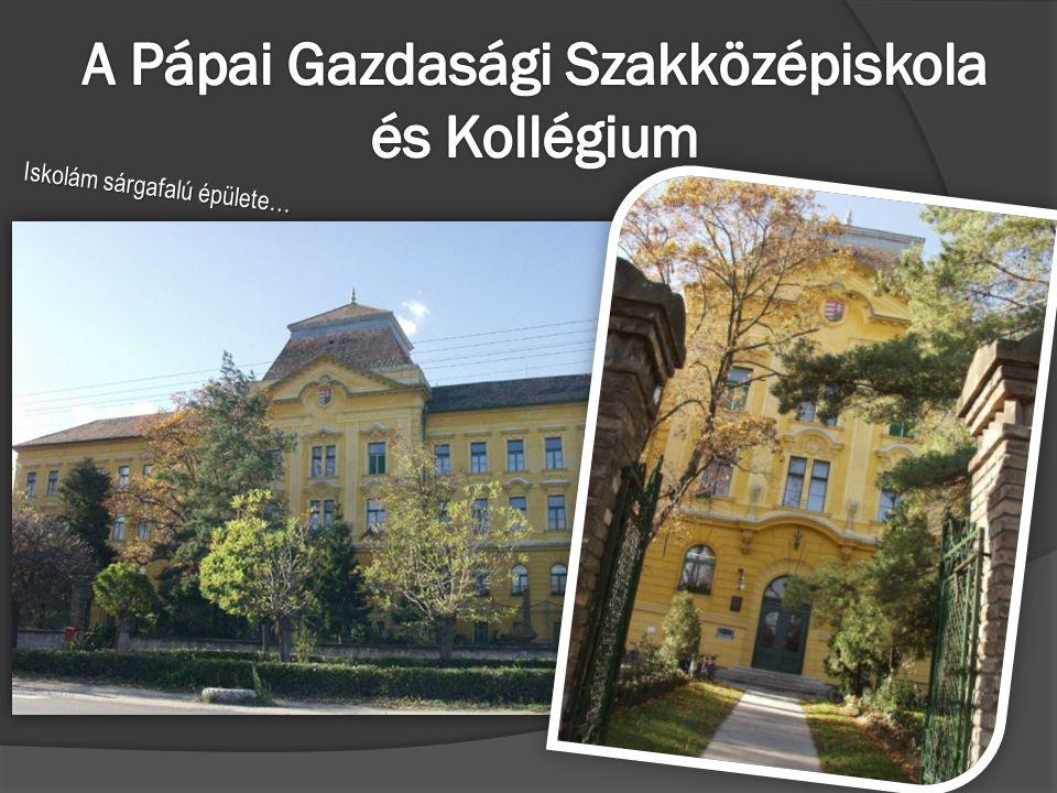 Iskolám sárgafalú épülete…