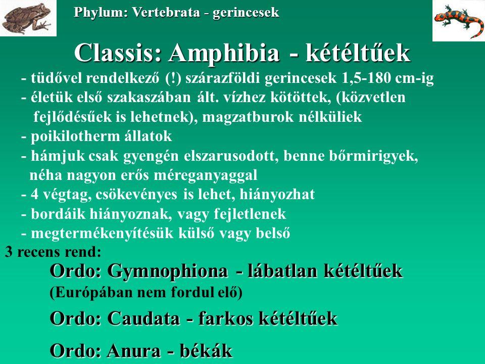 Classis: Amphibia - kétéltűek Ordo: Caudata - farkos kétéltűek Phylum: Vertebrata - gerincesek Ordo: Anura - békák Ordo: Gymnophiona - lábatlan kétéltűek (Európában nem fordul elő) - tüdővel rendelkező (!) szárazföldi gerincesek 1,5-180 cm-ig - életük első szakaszában ált.