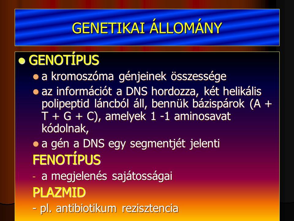 GENETIKAI ÁLLOMÁNY GENOTÍPUS GENOTÍPUS a kromoszóma génjeinek összessége a kromoszóma génjeinek összessége az információt a DNS hordozza, két helikális polipeptid láncból áll, bennük bázispárok (A + T + G + C), amelyek 1 -1 aminosavat kódolnak, az információt a DNS hordozza, két helikális polipeptid láncból áll, bennük bázispárok (A + T + G + C), amelyek 1 -1 aminosavat kódolnak, a gén a DNS egy segmentjét jelenti a gén a DNS egy segmentjét jelentiFENOTÍPUS - a megjelenés sajátosságai PLAZMID - pl.