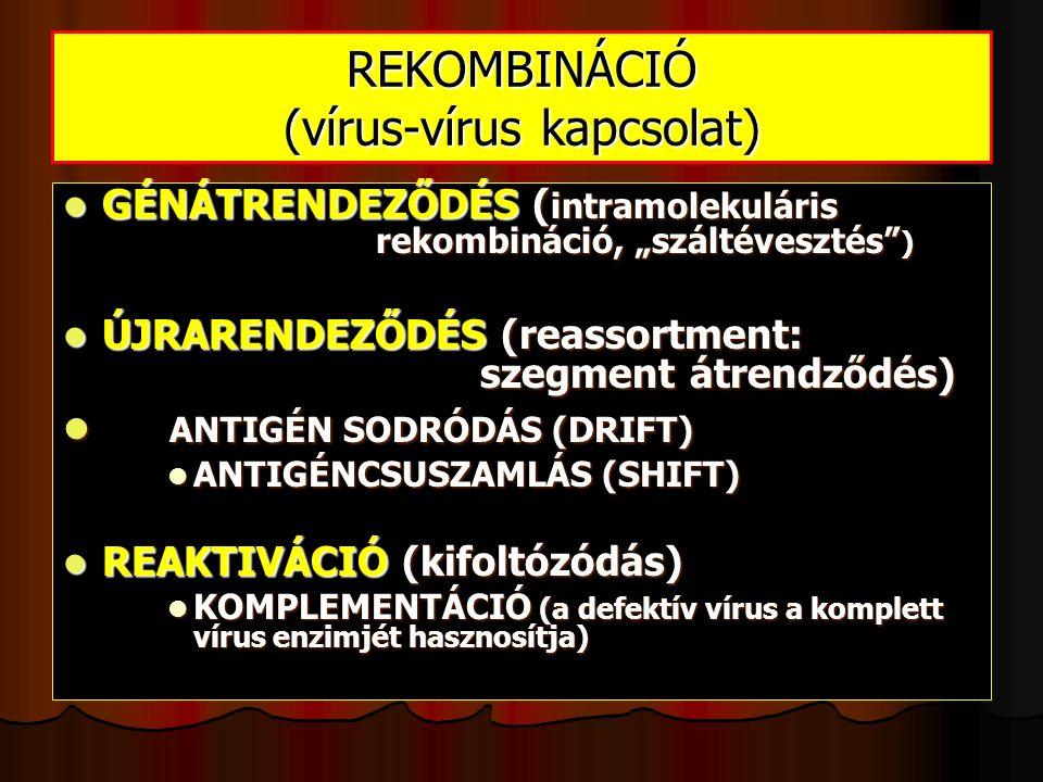 """REKOMBINÁCIÓ (vírus-vírus kapcsolat) GÉNÁTRENDEZŐDÉS ( intramolekuláris rekombináció, """"száltévesztés ) GÉNÁTRENDEZŐDÉS ( intramolekuláris rekombináció, """"száltévesztés ) ÚJRARENDEZŐDÉS (reassortment: szegment átrendződés) ÚJRARENDEZŐDÉS (reassortment: szegment átrendződés) ANTIGÉN SODRÓDÁS (DRIFT) ANTIGÉN SODRÓDÁS (DRIFT) ANTIGÉNCSUSZAMLÁS (SHIFT) ANTIGÉNCSUSZAMLÁS (SHIFT) REAKTIVÁCIÓ (kifoltózódás) REAKTIVÁCIÓ (kifoltózódás) KOMPLEMENTÁCIÓ (a defektív vírus a komplett vírus enzimjét hasznosítja) KOMPLEMENTÁCIÓ (a defektív vírus a komplett vírus enzimjét hasznosítja)"""