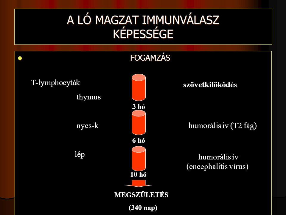 A LÓ MAGZAT IMMUNVÁLASZ KÉPESSÉGE FOGAMZÁS FOGAMZÁS 3 hó 6 hó 10 hó MEGSZÜLETÉS (340 nap) szövetkilökődés humorális iv (T2 fág) humorális iv (encephalitis vírus) T-lymphocyták thymus nycs-k lép