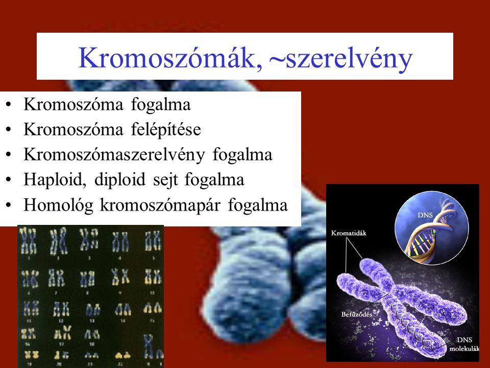Kromoszómák, ~szerelvény Kromoszóma fogalma Kromoszóma felépítése Kromoszómaszerelvény fogalma Haploid, diploid sejt fogalma Homológ kromoszómapár fogalma