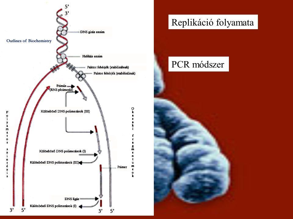 Replikáció folyamata PCR módszer
