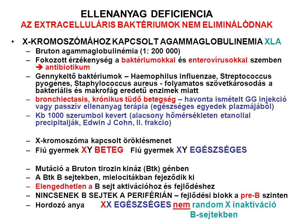 X-KROMOSZÓMÁHOZ KAPCSOLT AGAMMAGLOBULINEMIA XLA –Bruton agammaglobulinémia (1: 200 000) –Fokozott érzékenység a baktériumokkal és enterovírusokkal szemben  antibiotikum –Gennykeltő baktériumok – Haemophilus influenzae, Streptococcus pyogenes, Staphylococcus aureus - folyamatos szövetkárosodás a bakteriális és makrofág eredetű enzimek miatt –bronchiectasis, krónikus tüdő betegség – havonta ismételt GG injekció vagy passzív ellenanyag terápia (egészséges egyedek plazmájából) –Kb 1000 szerumbol kevert (alacsony hőmérsékleten etanollal precipitalják, Edwin J Cohn, II.