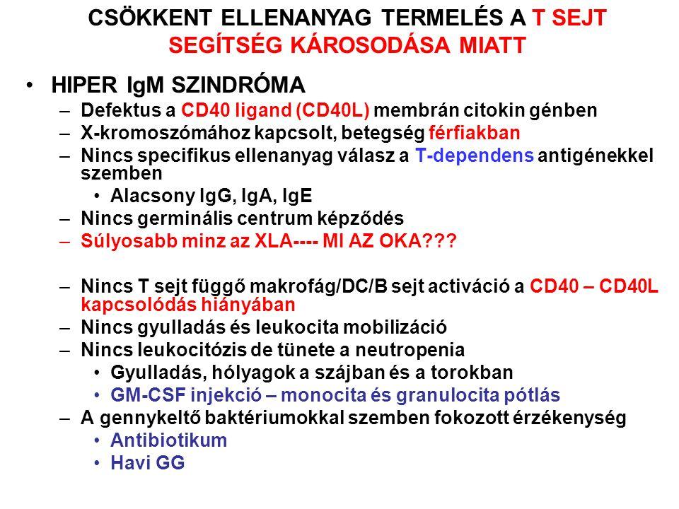 –Defektus a CD40 ligand (CD40L) membrán citokin génben –X-kromoszómához kapcsolt, betegség férfiakban –Nincs specifikus ellenanyag válasz a T-dependens antigénekkel szemben Alacsony IgG, IgA, IgE –Nincs germinális centrum képződés –Súlyosabb minz az XLA---- MI AZ OKA .