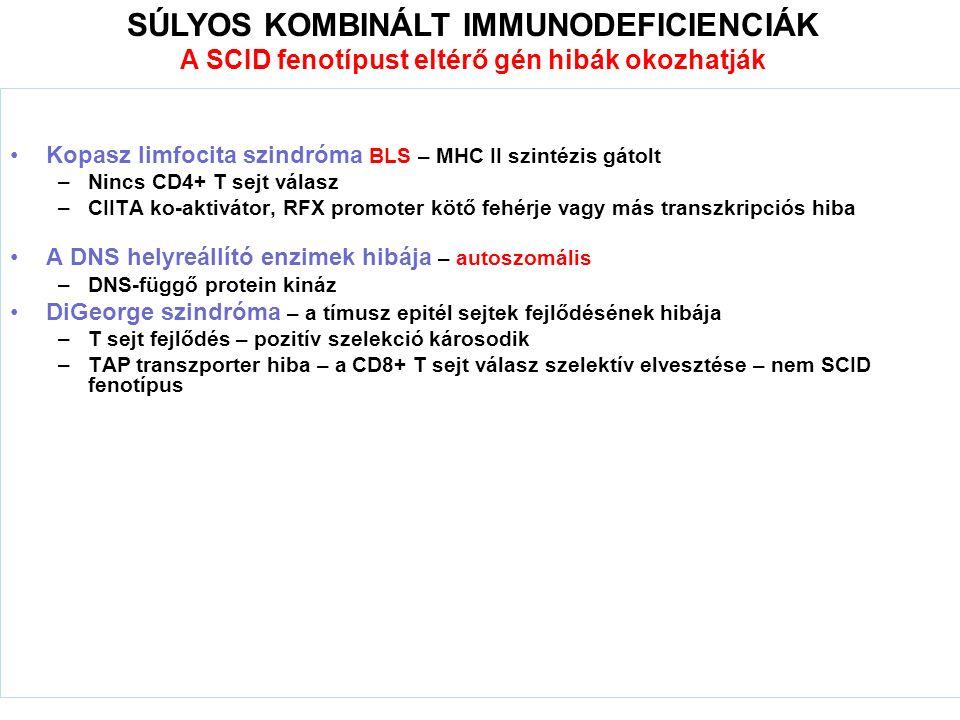 Kopasz limfocita szindróma BLS – MHC II szintézis gátolt –Nincs CD4+ T sejt válasz –CIITA ko-aktivátor, RFX promoter kötő fehérje vagy más transzkripciós hiba A DNS helyreállító enzimek hibája – autoszomális –DNS-függő protein kináz DiGeorge szindróma – a tímusz epitél sejtek fejlődésének hibája –T sejt fejlődés – pozitív szelekció károsodik –TAP transzporter hiba – a CD8+ T sejt válasz szelektív elvesztése – nem SCID fenotípus SÚLYOS KOMBINÁLT IMMUNODEFICIENCIÁK A SCID fenotípust eltérő gén hibák okozhatják