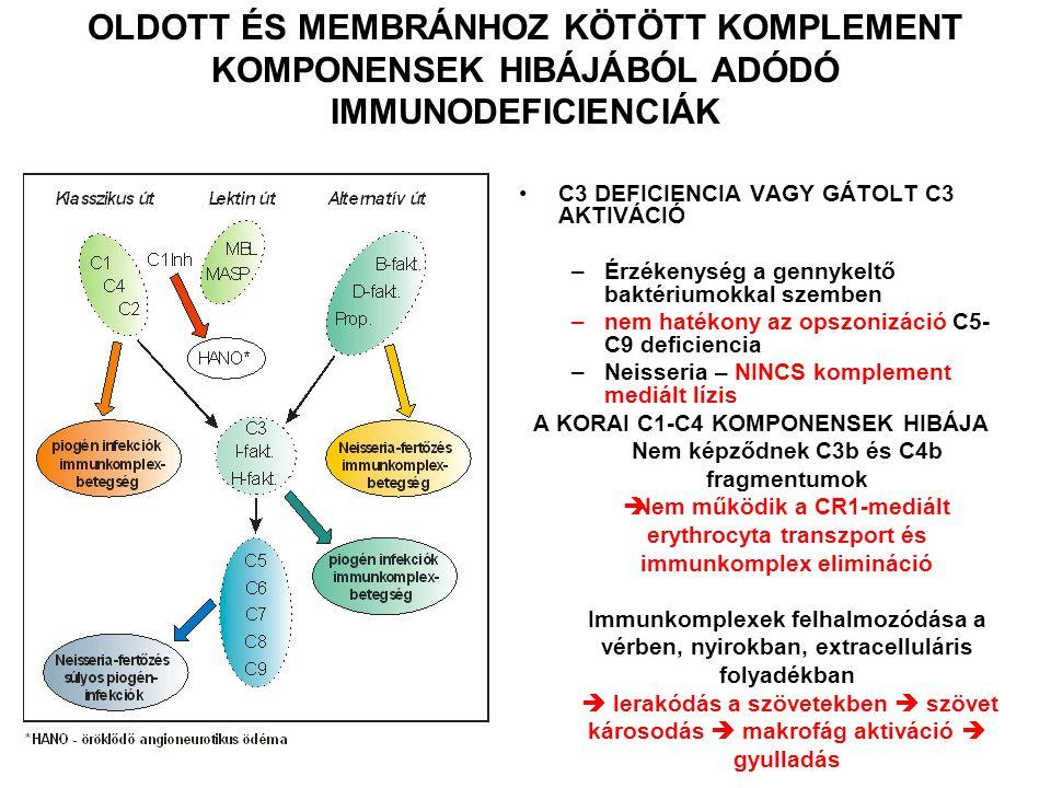 C3 DEFICIENCIA VAGY GÁTOLT C3 AKTIVÁCIÓ –Érzékenység a gennykeltő baktériumokkal szemben –nem hatékony az opszonizáció C5- C9 deficiencia –Neisseria – NINCS komplement mediált lízis A KORAI C1-C4 KOMPONENSEK HIBÁJA Nem képződnek C3b és C4b fragmentumok  Nem működik a CR1-mediált erythrocyta transzport és immunkomplex elimináció Immunkomplexek felhalmozódása a vérben, nyirokban, extracelluláris folyadékban  lerakódás a szövetekben  szövet károsodás  makrofág aktiváció  gyulladás OLDOTT ÉS MEMBRÁNHOZ KÖTÖTT KOMPLEMENT KOMPONENSEK HIBÁJÁBÓL ADÓDÓ IMMUNODEFICIENCIÁK