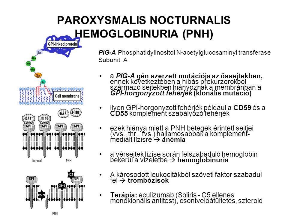 a PIG-A gén szerzett mutációja az őssejtekben, ennek következtében a hibás prekurzorokból származó sejtekben hiányoznak a membránban a GPI-horgonyzott fehérjék (klonális mutáció) ilyen GPI-horgonyzott fehérjék például a CD59 és a CD55 komplement szabályozó fehérjék ezek hiánya miatt a PNH betegek érintett sejtjei (vvs., thr., fvs.) hajlamosabbak a komplement- mediált lízisre  anémia a vérsejtek lízise során felszabaduló hemoglobin bekerül a vizeletbe  hemoglobinuria A károsodott leukocitákból szöveti faktor szabadul fel  trombózisok Terápia: eculizumab (Soliris - C5 ellenes monoklonális antitest), csontvelőátültetés, szteroid PAROXYSMALIS NOCTURNALIS HEMOGLOBINURIA (PNH) PIG-A Phosphatidylinositol N-acetylglucosaminyl transferase Subunit A