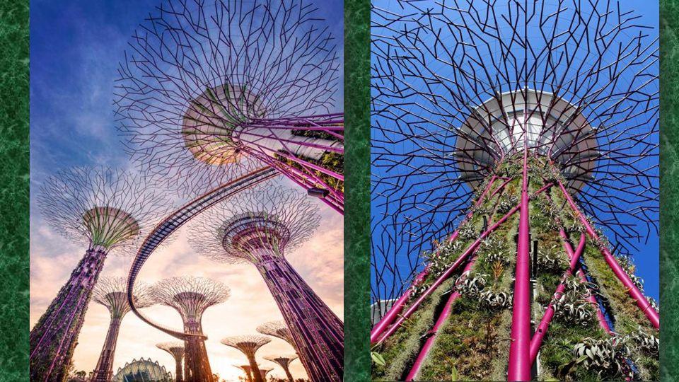 Olyan fa-szer ű struktúrák, amelyek uralják a tájat, kert Heights kezdve 25 méter (82 méter) és 50 méter (160 méter).