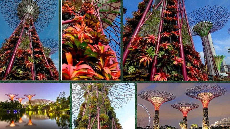 Több mint 162.900 növény, több mint 200 faj és fajta bromeliads, orchideák, páfrányok és szőlő trópusi virágokkal ültetett