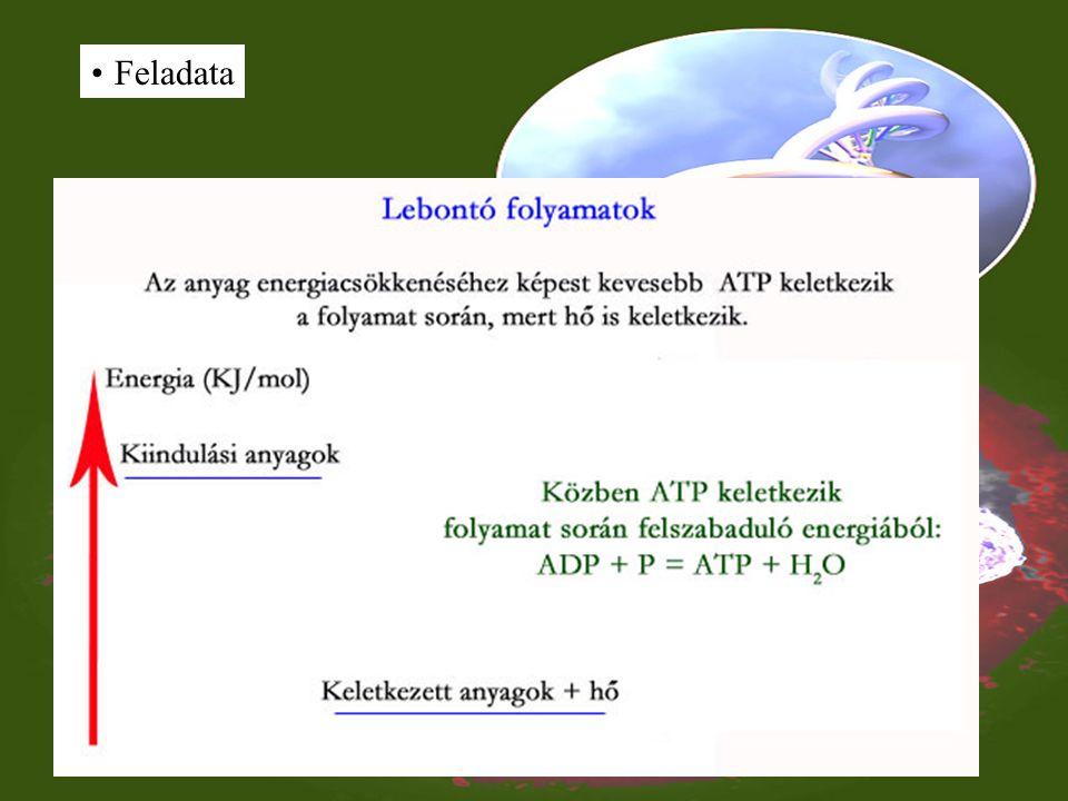 ATP Felépítése