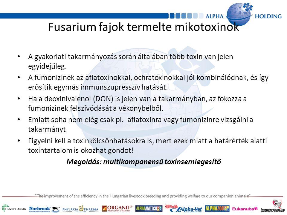 Fusarium fajok termelte mikotoxinok A gyakorlati takarmányozás során általában több toxin van jelen egyidejűleg.