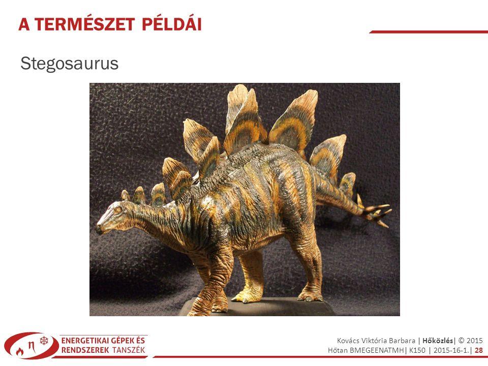 Kovács Viktória Barbara | Hőközlés| © 2015 Hőtan BMEGEENATMH| K150 | 2015-16-1.| 28 A TERMÉSZET PÉLDÁI Stegosaurus