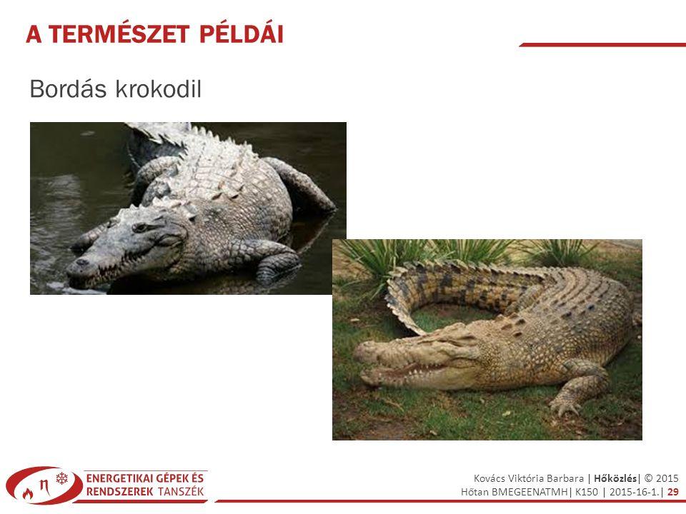 Kovács Viktória Barbara | Hőközlés| © 2015 Hőtan BMEGEENATMH| K150 | 2015-16-1.| 29 A TERMÉSZET PÉLDÁI Bordás krokodil