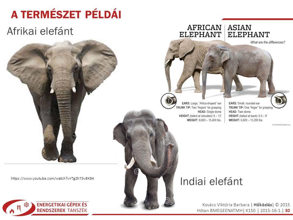Kovács Viktória Barbara | Hőközlés| © 2015 Hőtan BMEGEENATMH| K150 | 2015-16-1.| 30 A TERMÉSZET PÉLDÁI Afrikai elefánt https://www.youtube.com/watch?v
