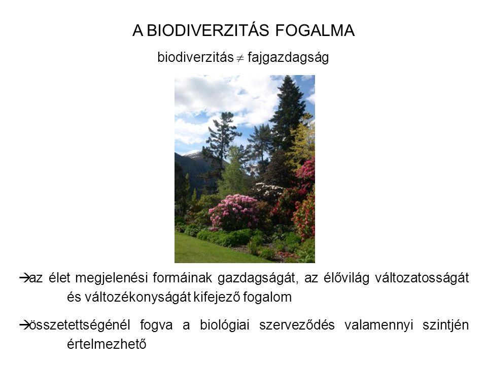 A BIODIVERZITÁS FOGALMA biodiverzitás  fajgazdagság  az élet megjelenési formáinak gazdagságát, az élővilág változatosságát és változékonyságát kife