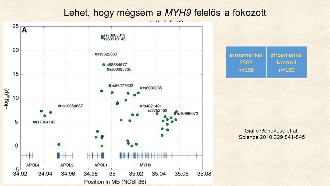 Lehet, hogy mégsem a MYH9 felelős a fokozott rizikóért.