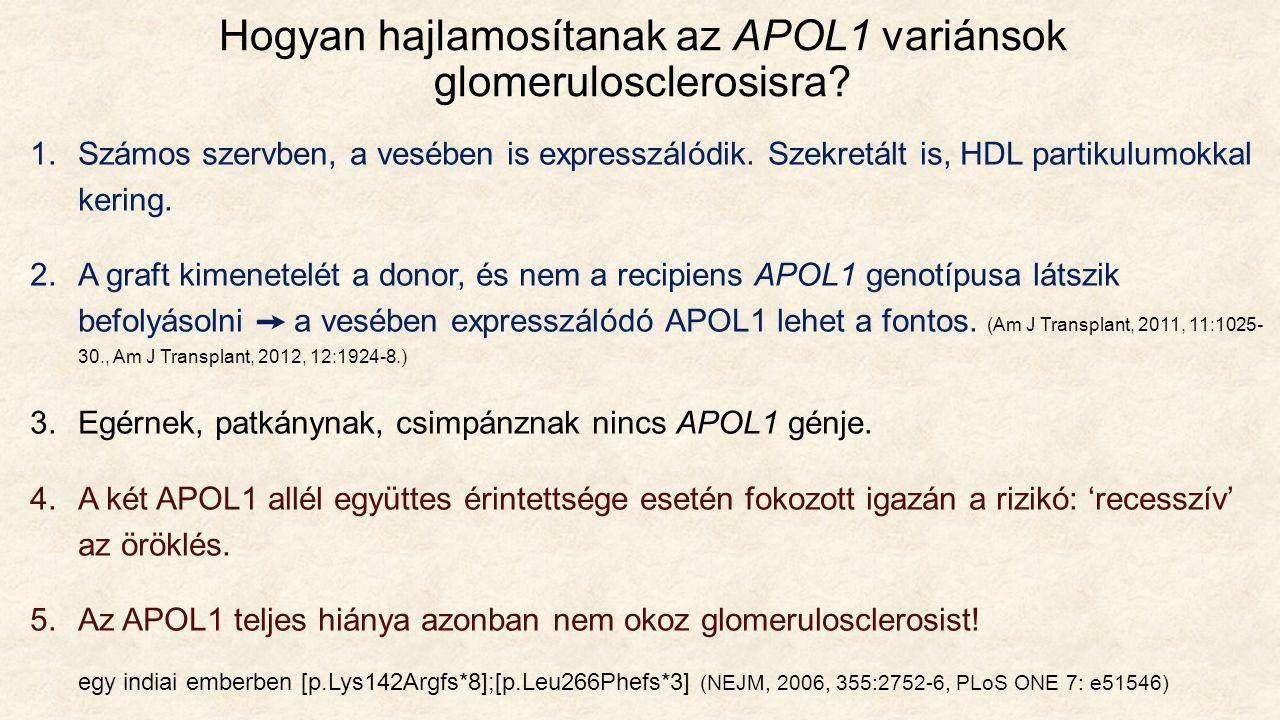 Hogyan hajlamosítanak az APOL1 variánsok glomerulosclerosisra.